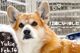 yukie-020814.jpg