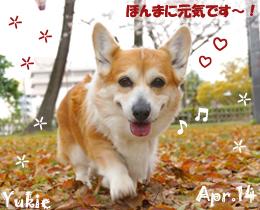 yukie-040114-1.jpg