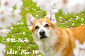 yukie-040114-2.jpg