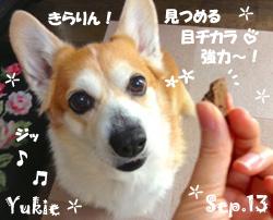 yukie-092013-1.jpg