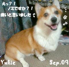 yukie-092409-2.jpg