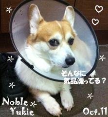 yukie-100511-1.jpg