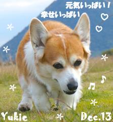 yukie-122613-1.jpg