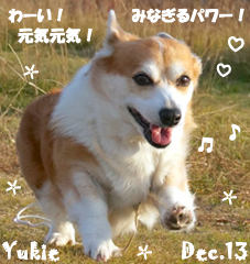 yukie-122613-2.jpg