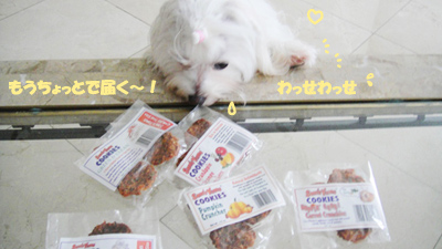 yamcookies-coco-041312.jpg