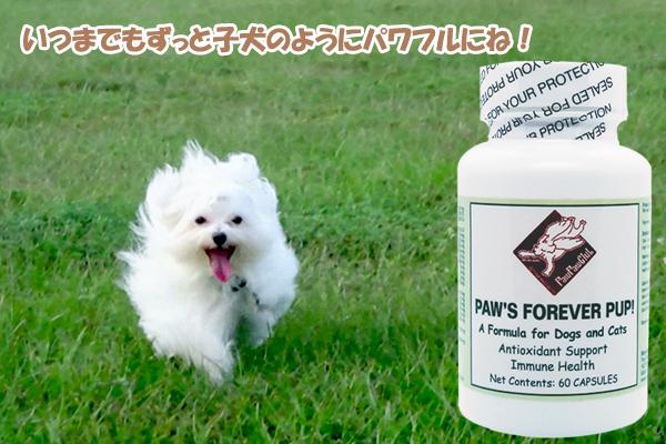 徹底した抗酸化で錆びないわんこに!いつまでも子犬のようにパワフルで元気にね!Paw's フォーエバーパップ! (60 カプセル)