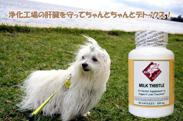 お薬から肝臓を守ってちゃんとデトックス!肝臓の機能を応援するハーブ ミルクシッスル (90 カプセル)