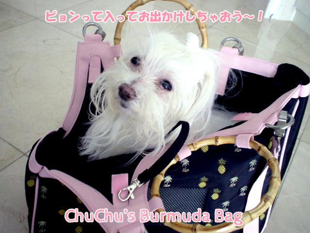 chuchu_barmudabag-031804-top.jpg