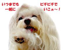 chuchu110904.jpg
