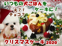 初めてのチョコレート?!キャロブクリスマスケーキ