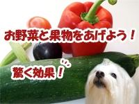 お野菜や果物をあげよう!