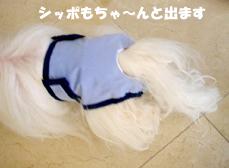 chuchu-poochpants-tail.jpg